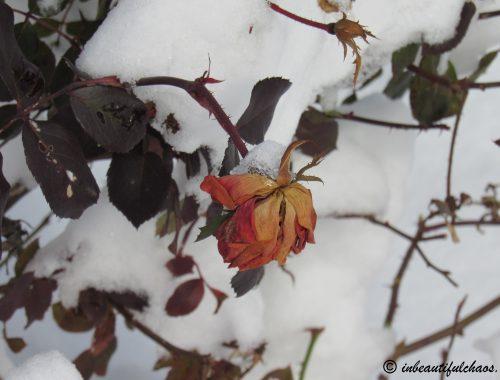 """""""Seasons Change"""""""